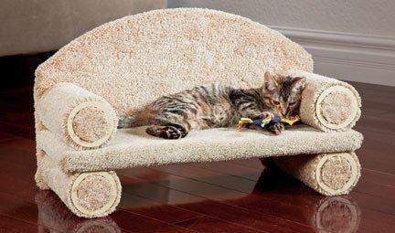 CLASE del gato del gatito del sofá, 30