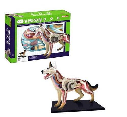 Modelo Tedco 4D Vision perro Anatomía